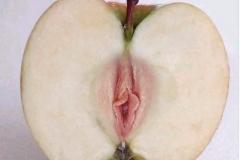 Pomme-vagin - Photos drôles